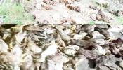 ভূল চিকিৎসায় হাঁসের আকষ্মিক মৃত্যুতে-পাঁচ বন্ধুর স্বপ্ন ভঙ্গ !!!