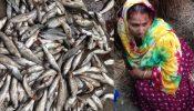 নোয়াখালীতে মাছের সাথে শত্রুতা, সংঘর্ষে  নারী সহ আহত ৪