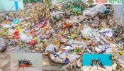 মেয়রের বাড়ির সামনে ময়লা আবর্জনার স্তুপ, ডেঙ্গু ভয়ে আক্রান্ত এলাকাবাসী…