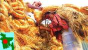 হ্রাস পাবে দারিদ্র্য এবং সমৃদ্ধ হবে সোনার বাংলা- সোনালি আঁশ
