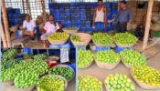 ঠাকুরগাঁওয়ে সস্তায় চলছে আম বাজার, হতাশায় আম ব্যবসায়ী