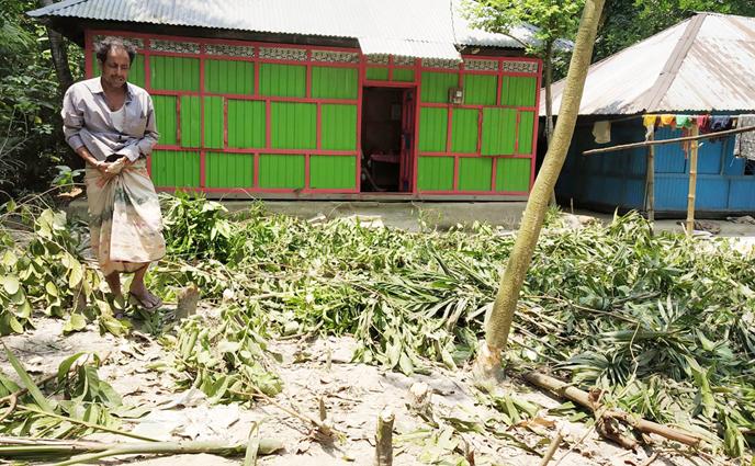 বেগমগঞ্জে ভূমি বিরোধের জের ধরে বিপুল সংখ্যক ফলজ গাছ কর্তন