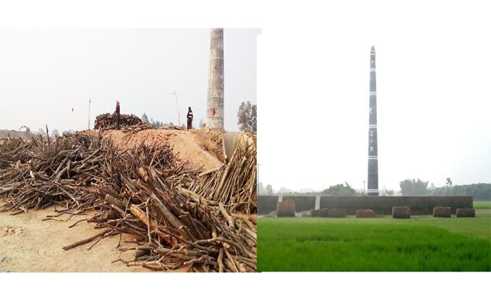 শেষ সময়েও পীরগঞ্জের ইটভাটা গুলিতে পুড়ছে-হাজার-হাজার মন কাঠ