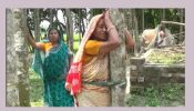 হিন্দু নারীকে গাছে বেঁধে লাঞ্ছিত করে জমি দখল