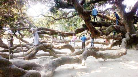 ঠাকুরগাঁওয়ের বালিয়াডাঙ্গীতে ২০ দিনব্যাপী বৈশাখী মেলার আয়োজন