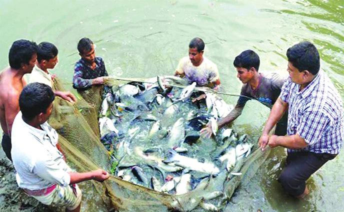 পার্বতীপুরে ক্যানেলটি হতে পারে দেশীয় মাছ উৎপাদনের অভয়ারণ্য